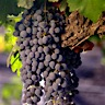 About Cabernet Sauvignon Red Wine
