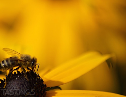 Bees Have the Midas Touch